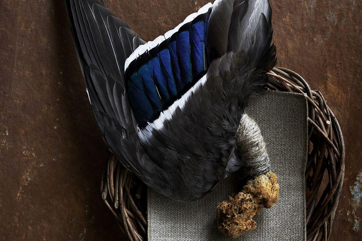 Dead Birds Are So Hot on Tasting Menus Right Now - Eater