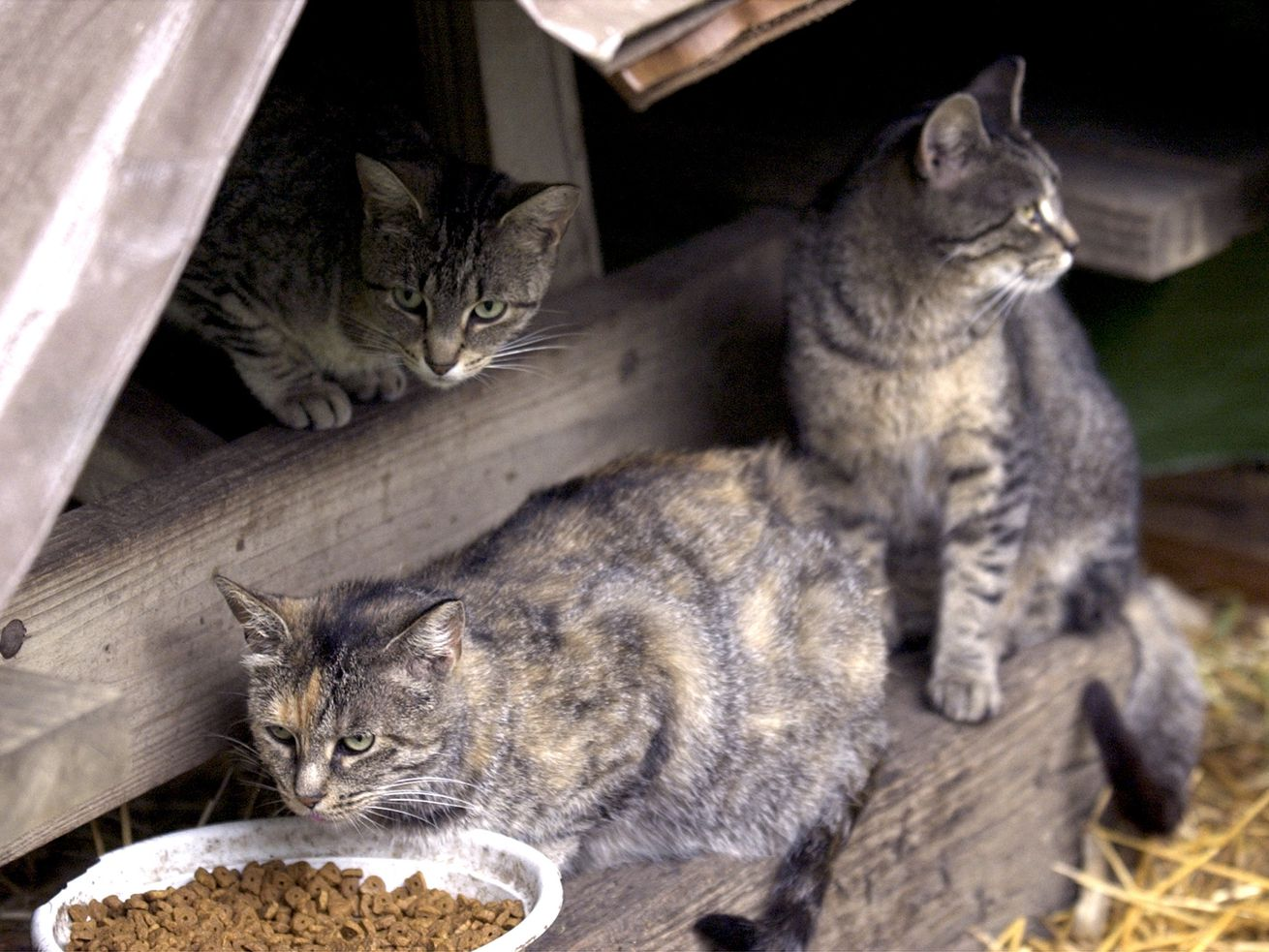 People may feel sorry for stray cats, but they also should feel sorry for the birds who will be killed by the cats