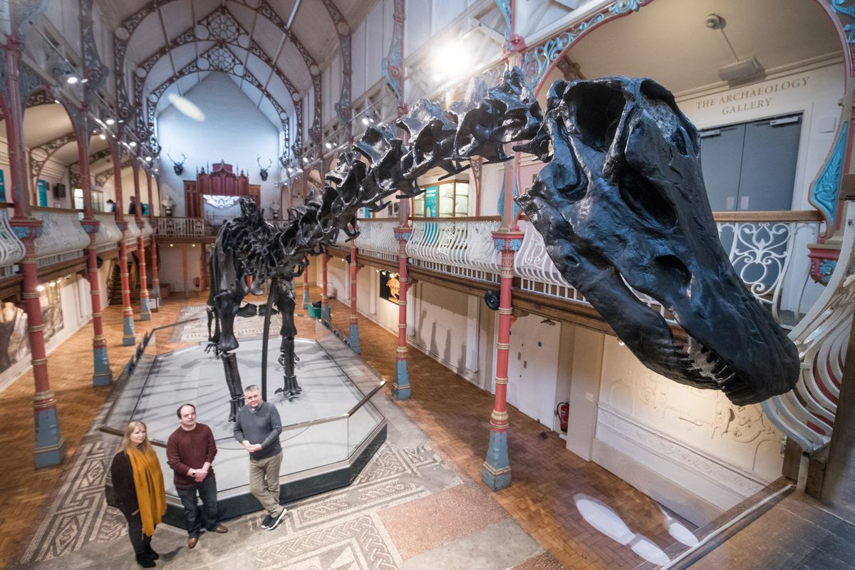 Dippy The Diplodocus Arrives At Dorset County Museum