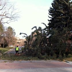 Strong winds downed a large tree at Elizabeth and 200 South Thursday, Dec. 1, 2011 in Salt Lake City.