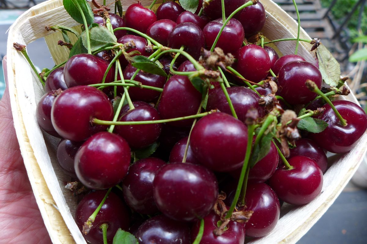A basket of sour cherries.