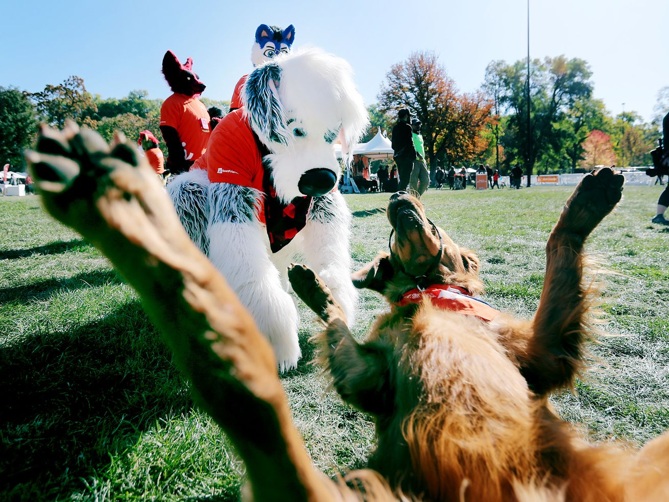 Photos: Who's a good dog? Utah pet owners strut their mutts during annual fundraising event in Salt Lake City