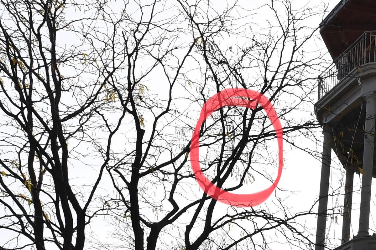 The Parks Department highlighted a rope they say was left in a tree next to the refurbished fire tower in Marcus Garvey Park.