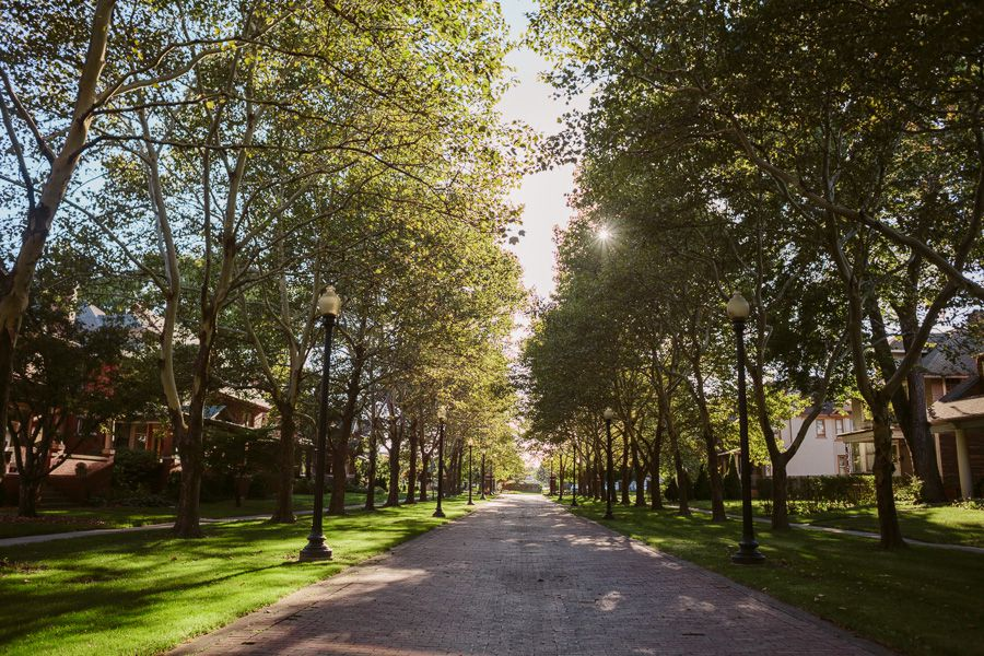 Pallister Avenue in Detroit. The street is lined with rows of trees.