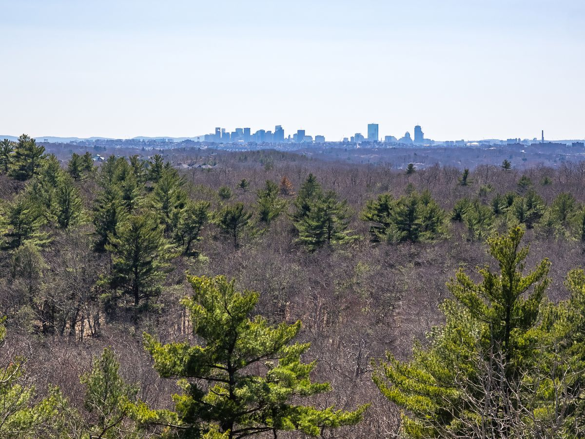 The view over a forest with skyscrapers in the distance.