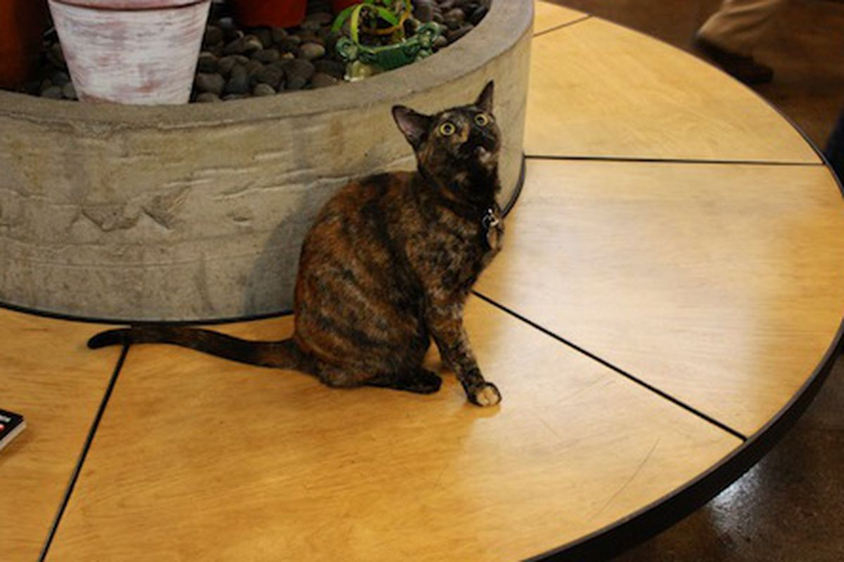 """Franny, the Skylight Books cat who may or may not let you pet her. Image via <a href=""""http://www.pickygourmet.net/2010/05/homemade-life-foodie-book-club-post/"""">Picky Gourmet</a>"""