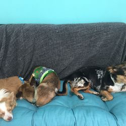 Looks like the pups are feeling right at home.