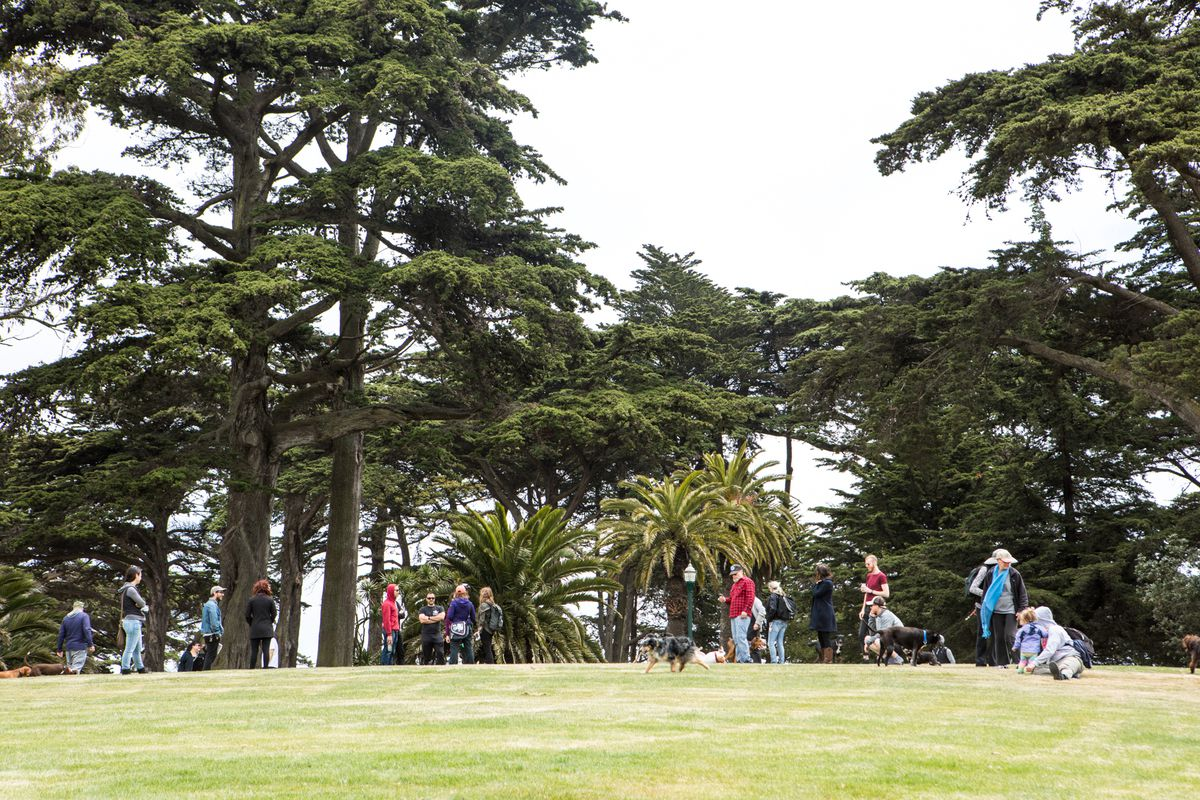 People in Alamo Square with trees in the background.