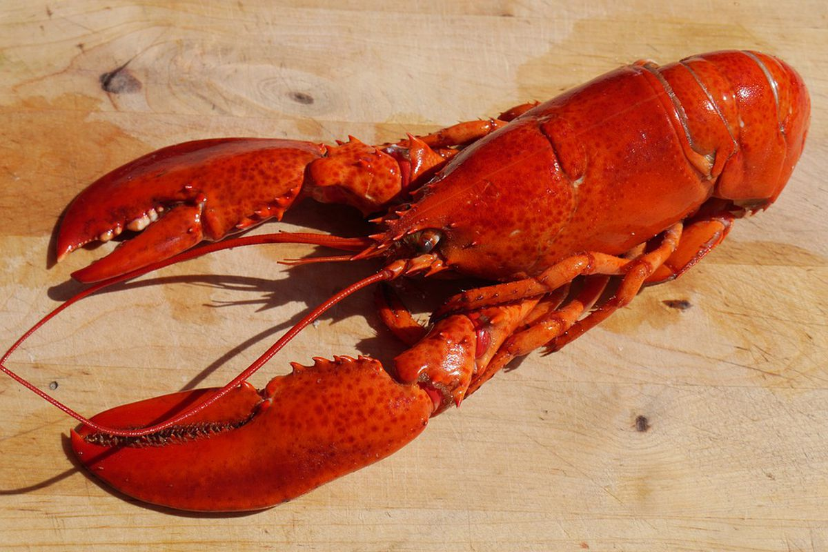 A cooked lobster