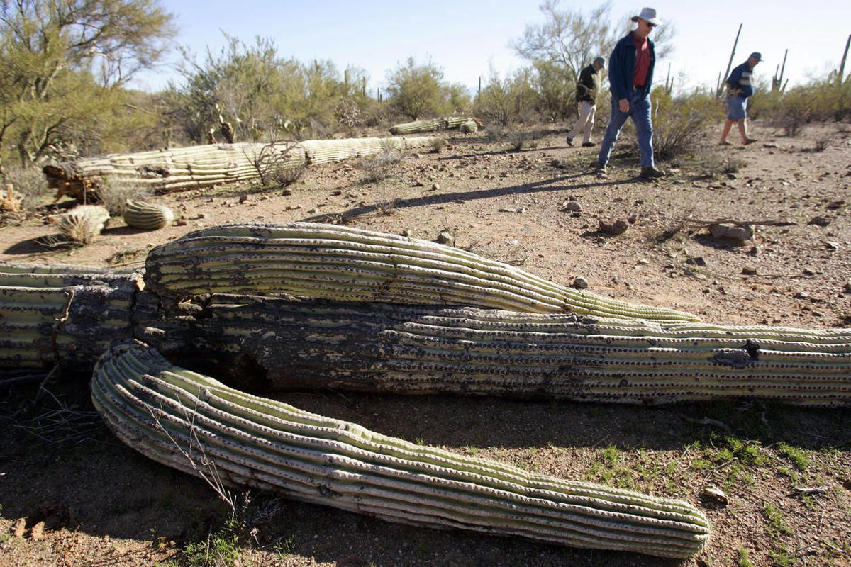 Ironwood Forest Shooters Of Saguaros Strike Again Deseret News
