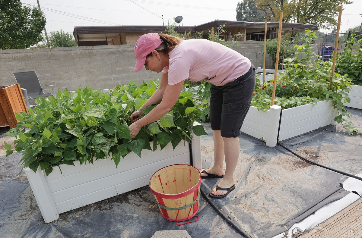 Debra Grant works in her garden at her home in Salt Lake City on Sunday, Aug. 8, 2021. A protein that helps regulate calcium signaling within heart cells could play a key role in preventing her chronic heart failure.