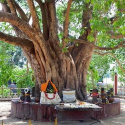 The Munesvaram Temple, near Chilaw, Sri Lanka, is dedicated to the Hindu god Shiva. Near the temple, a large tree is venerated by a sacred pool.