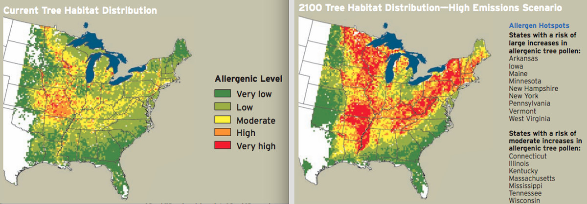 tree pollen allergy risk in the united states
