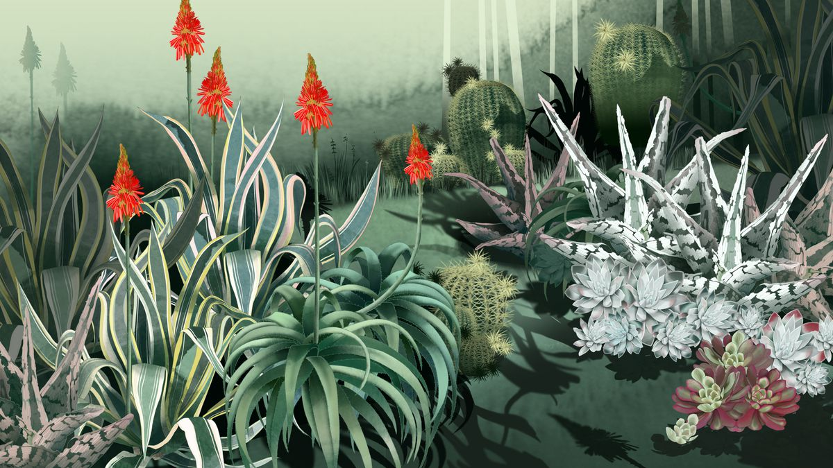 Consider the cactus how succulents took over the world the ringer illustration by agata wierzbicka izmirmasajfo