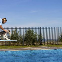 Alyssa Krol of Sandy tries to coax her dog Bob to jump off the diving board and into the Draper city pool.