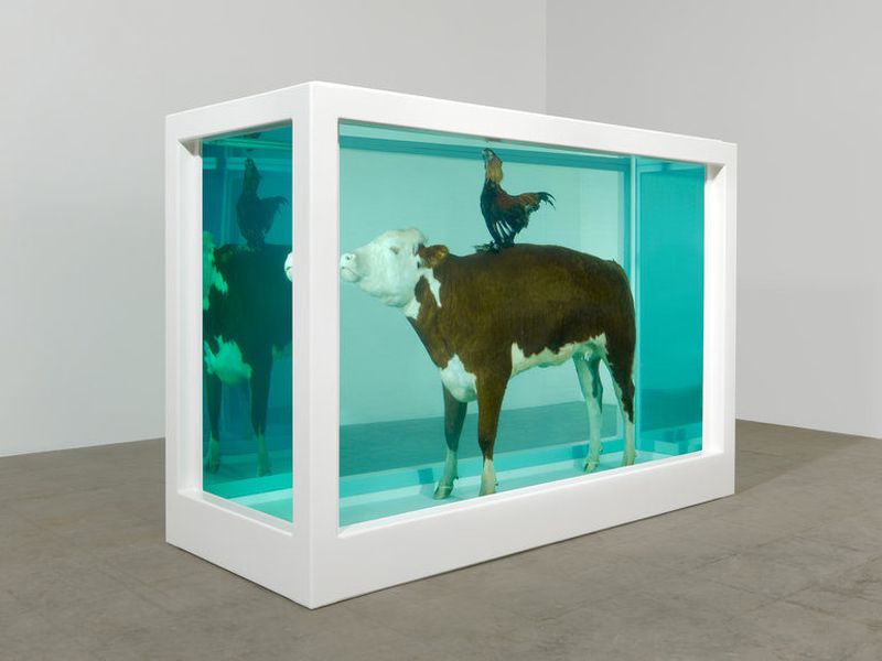 Damien Hirst Natural History Series