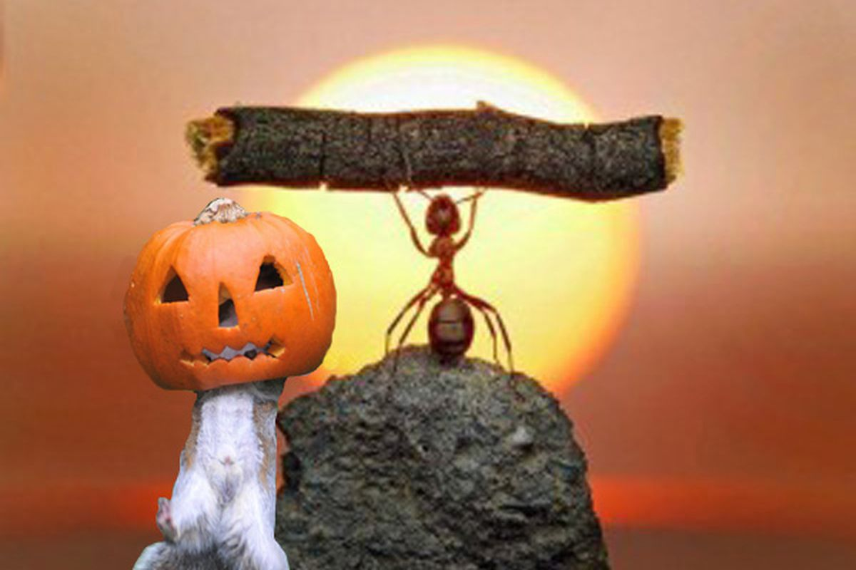 One works and one gets his head stuck in a pumpkin.  Guess who is who.