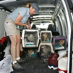 In Sandy on Tuesday, Julie Castle unloads one of the cats that she helped rescue in the aftermath of Katrina.
