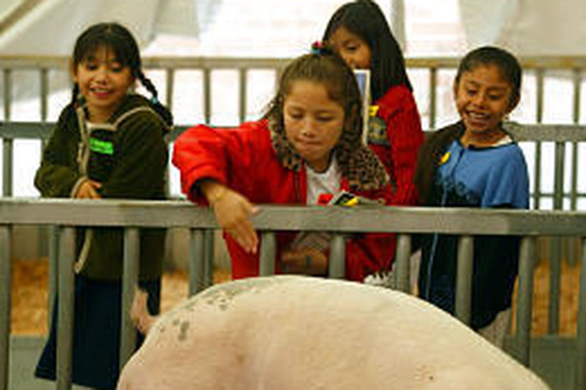 Students from Jackson Elementary School watch Rosie Camay pet a hog at the Utah State Fair. The fair ends on Sunday.