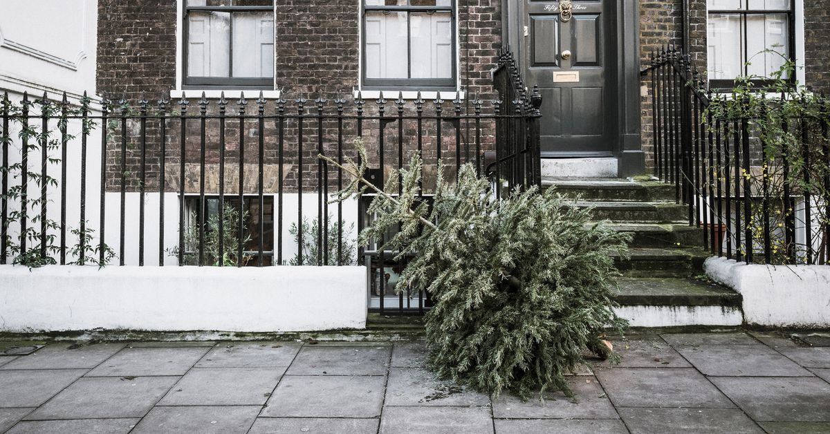 Amazon Will Sell Live, Seven-foot Christmas Trees This
