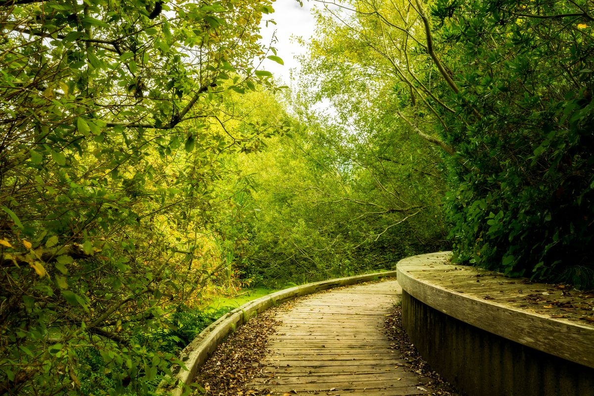 A curved, wooden path winds through several different kinds of leaved trees and shrubs, with a built-in bench along the right side.