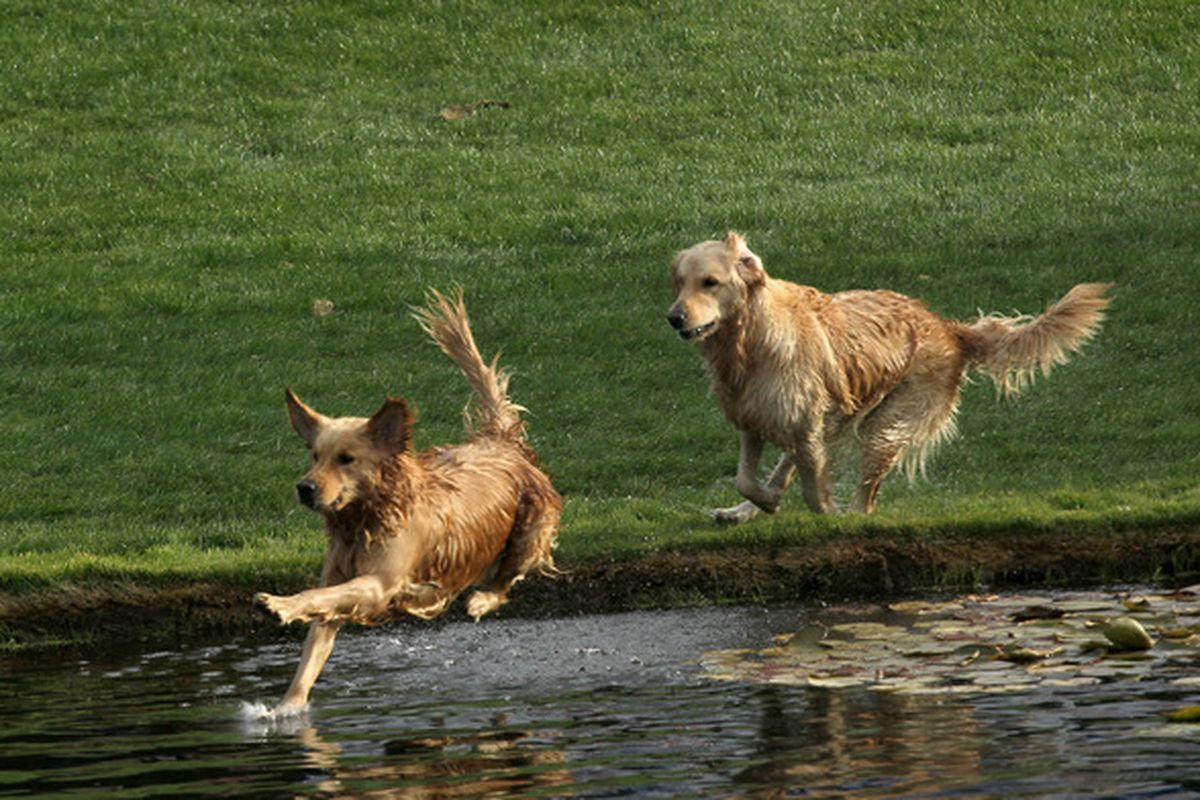There don't seem to be any photos from this game yet, so here are some playful dogs. (Stephen Dunn/Getty Images)