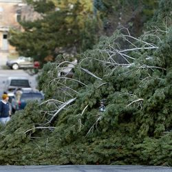 A toppled tree overtakes Elizabeth Street after a wind storm in Salt Lake City on Thursday, Dec. 1, 2011.