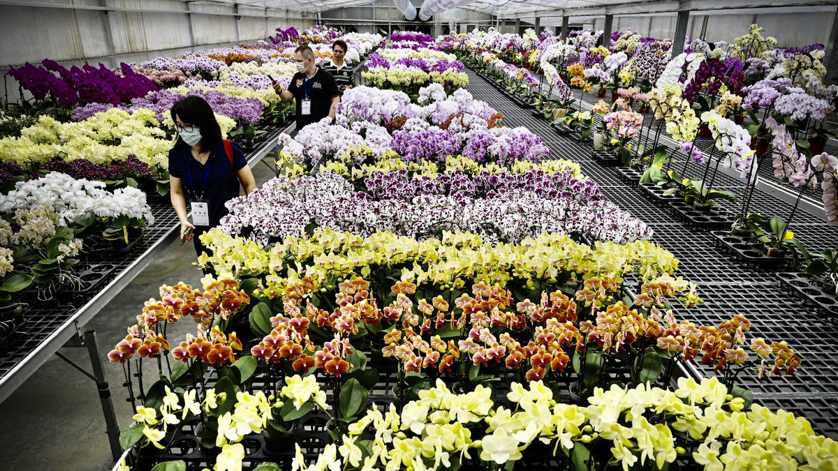 Visitors walk by orchids at the Char Ming Agriculture showroom.