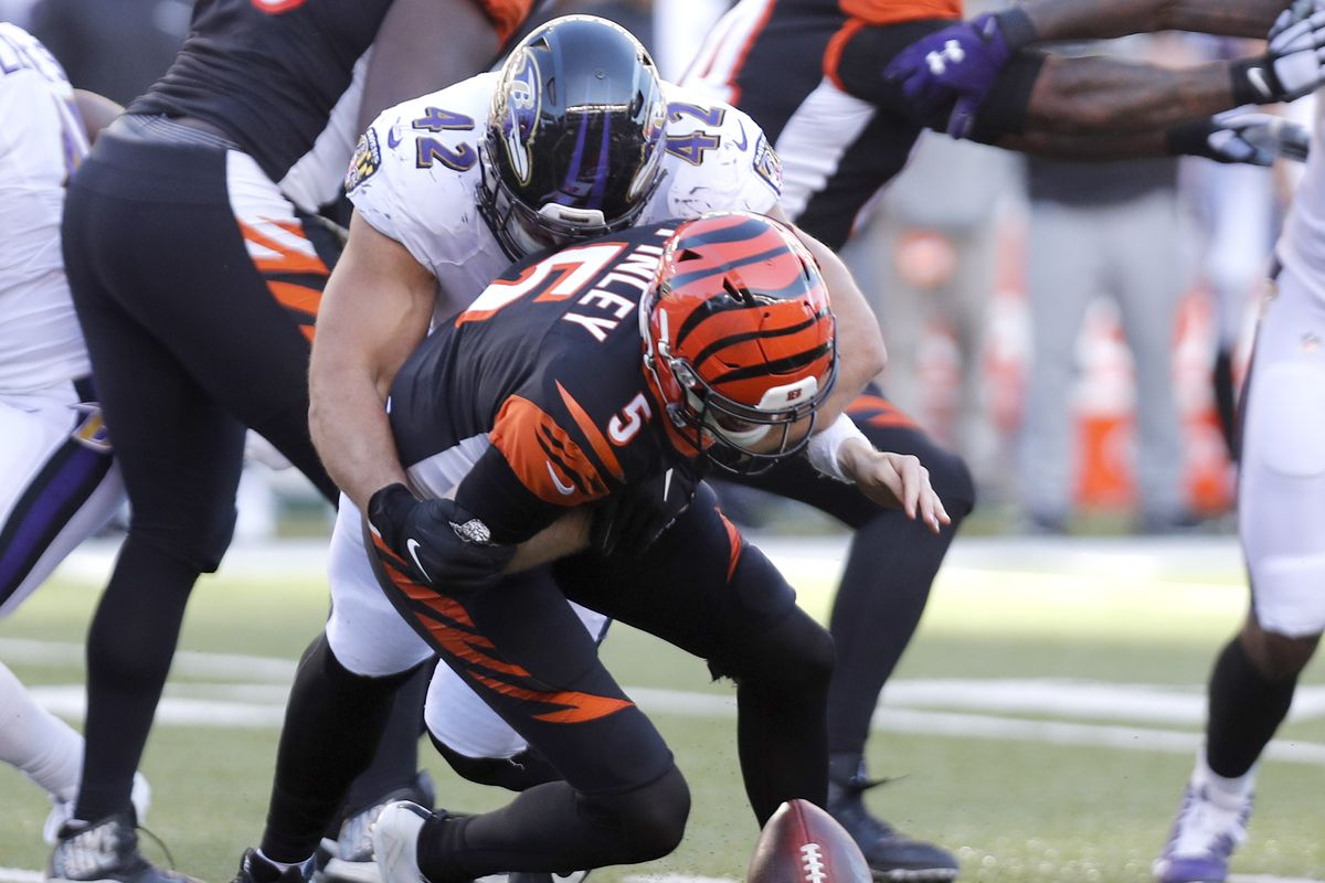Cincinnati Bengals quarterback Ryan Finley fumbles as he is hit by Baltimore Ravens defensive lineman Patrick Ricard during the second half at Paul Brown Stadium.