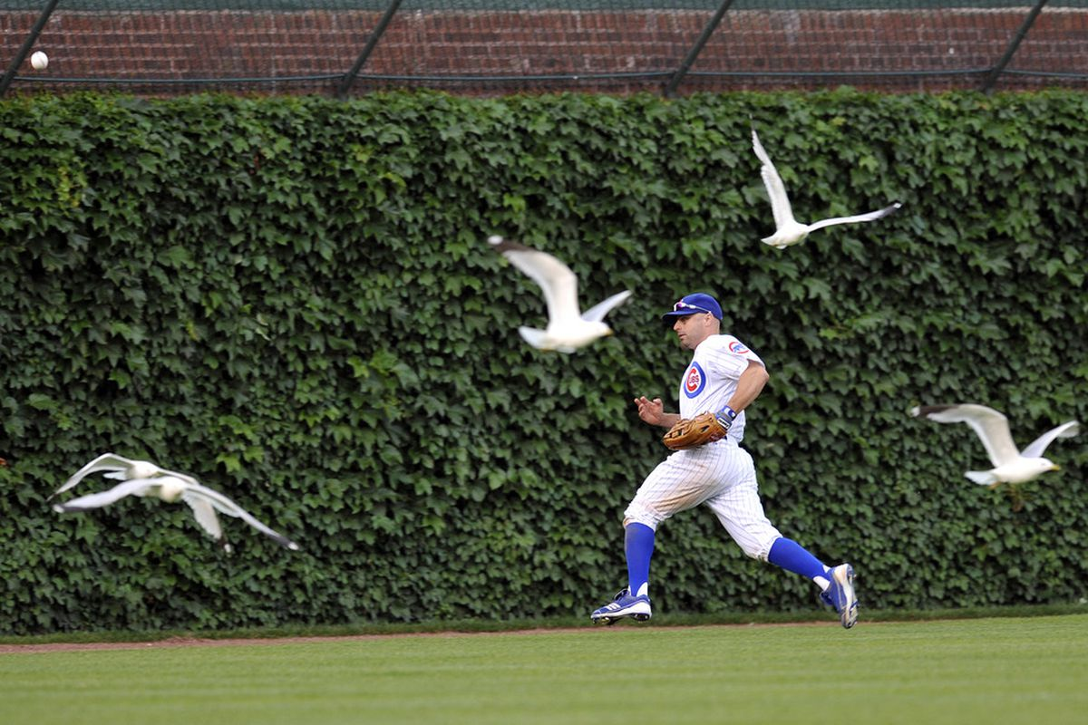 Reed Johnson of the Chicago Cubs chases after a ball in center field as seagulls fly by against the New York Yankees on June 18, 2011 at Wrigley Field in Chicago, Illinois. The Yankees defeated the Cubs 4-3.  (Photo by David Banks/Getty Images)