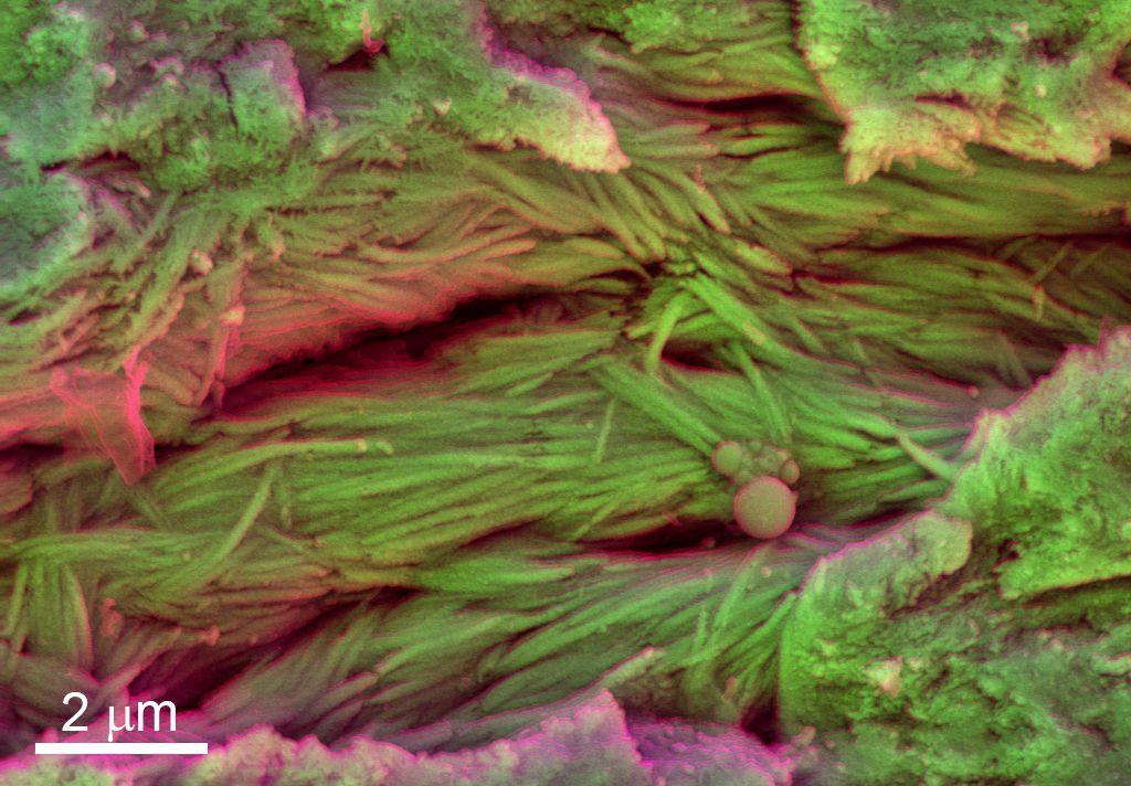 dino collagen