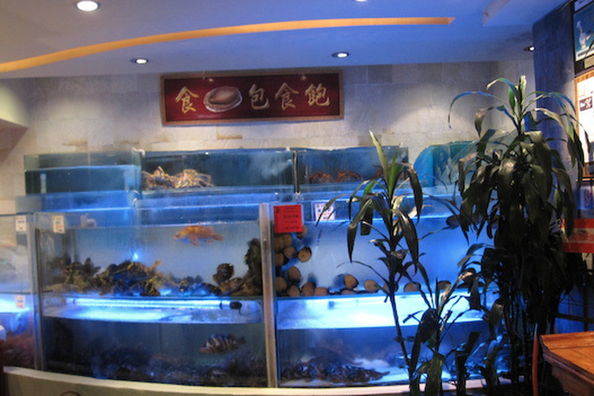 Koi palace 39 s dirty fish tanks are freaking everyone out for Koi tank size