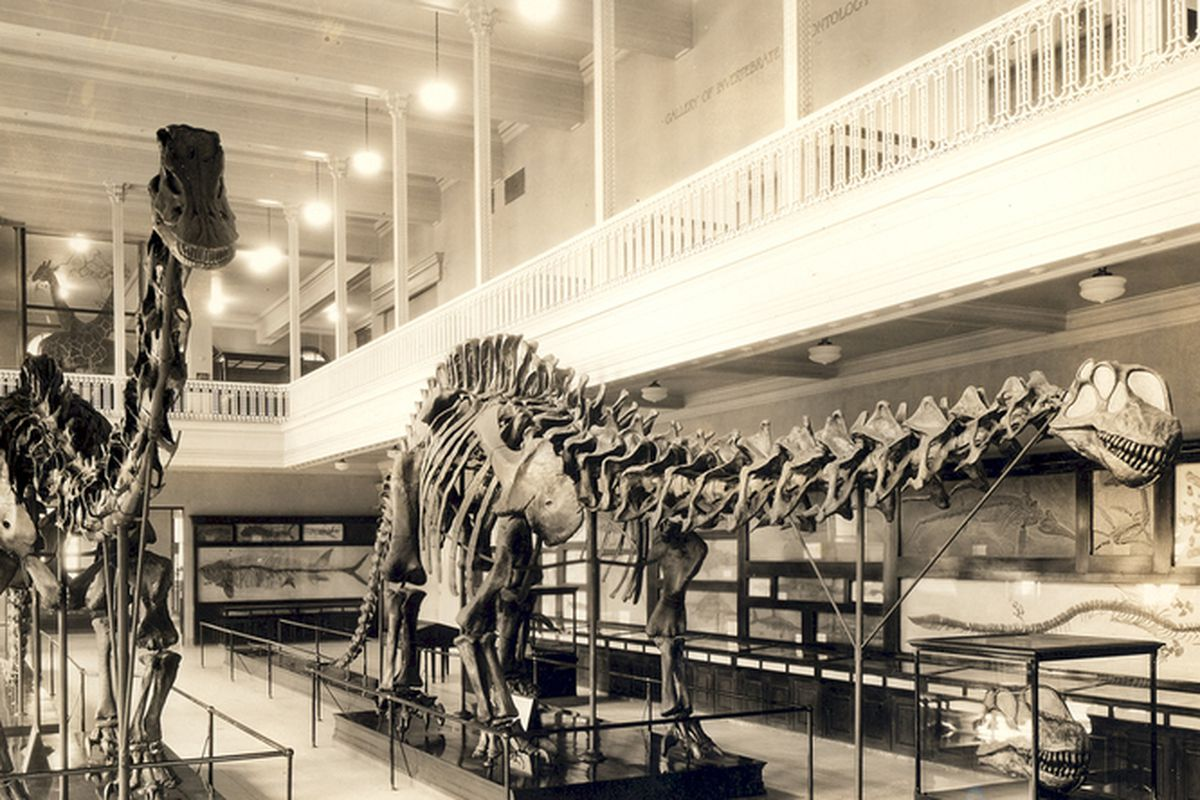 """via <a href=""""http://media.npr.org/assets/img/2012/12/06/diplodocus-left_apatosaurus-right-with-wrong-head-1934-23f4cf4daef8af6189de83835b703d2ff9f8dc22-s51.jpg"""">media.npr.org</a>"""