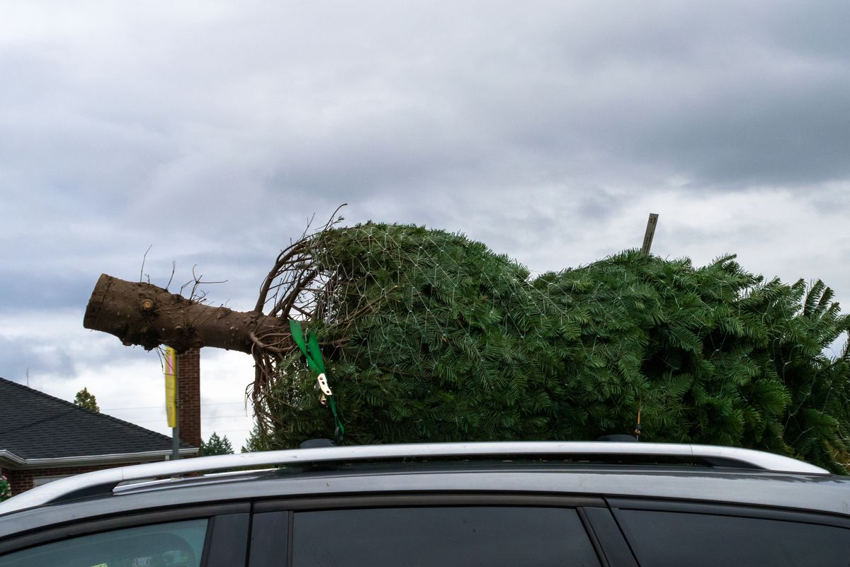 How to get rid of your Christmas tree in Seattle - Curbed Seattle