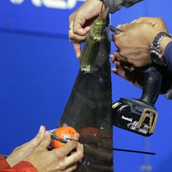 In this Sept. 13, 2012, photo, researchers screw satellite and acoustic tags onto the dorsal fin of a great white shark on the research vessel Ocearch in the Atlantic Ocean off the coast of Chatham, Mass. Once released, the tags will track the location and speed of the nearly 15-foot, 2,292-pound Genie, named for famed shark researcher Eugenie Clark. The Ocearch team baits the fish and leads them onto a lift, tagging and taking blood, tissue and semen samples up close from the world's most feared predator. The real-time satellite tag tracks the shark each time its dorsal fin breaks the surface, plotting its location on a map.
