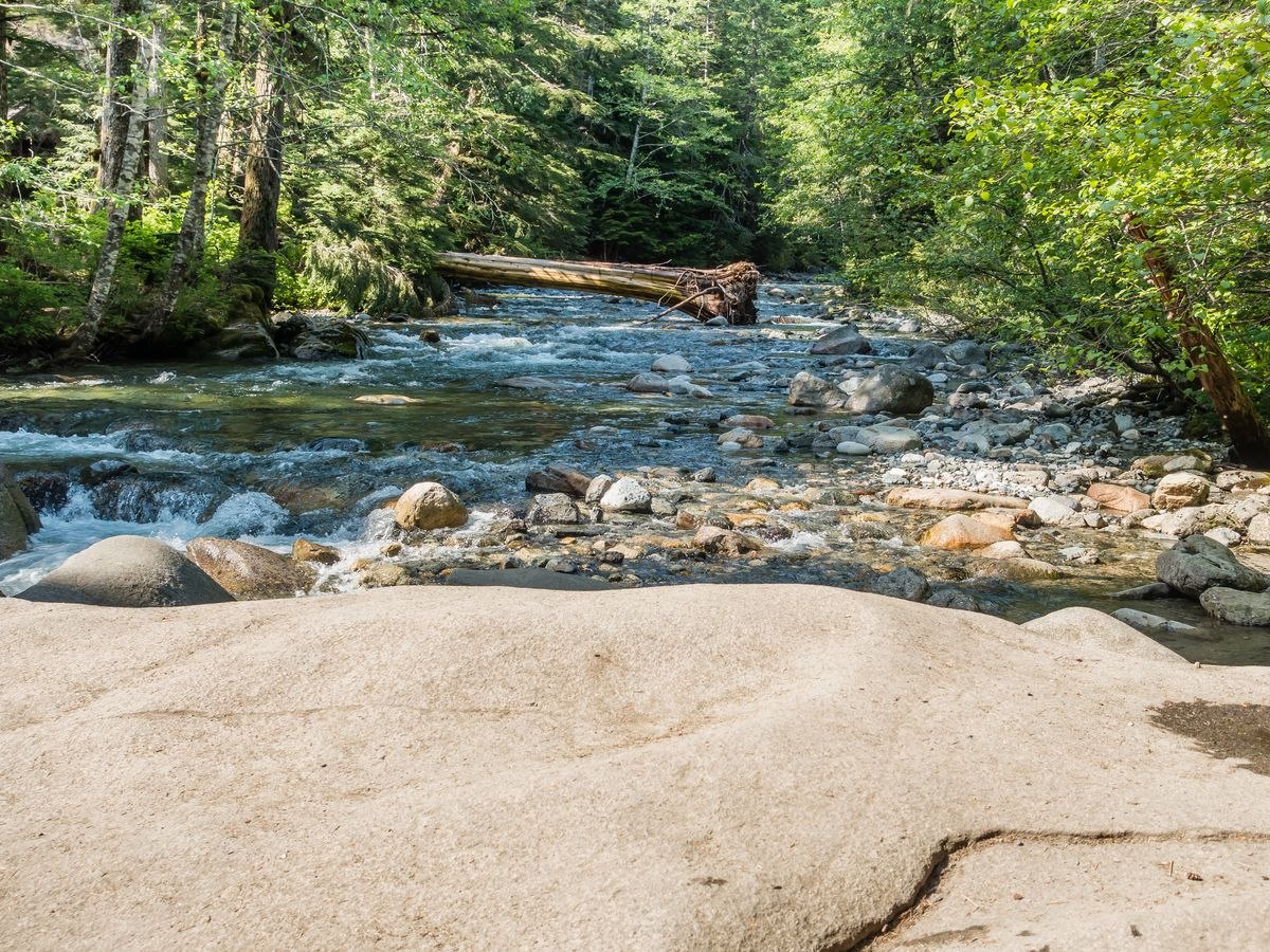 In front of a large, flat, smooth stone, a creek runs through a forest of evergreen trees.
