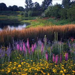 The Chicago Botanic Garden boasts many ponds and streams among its 26 gardens.