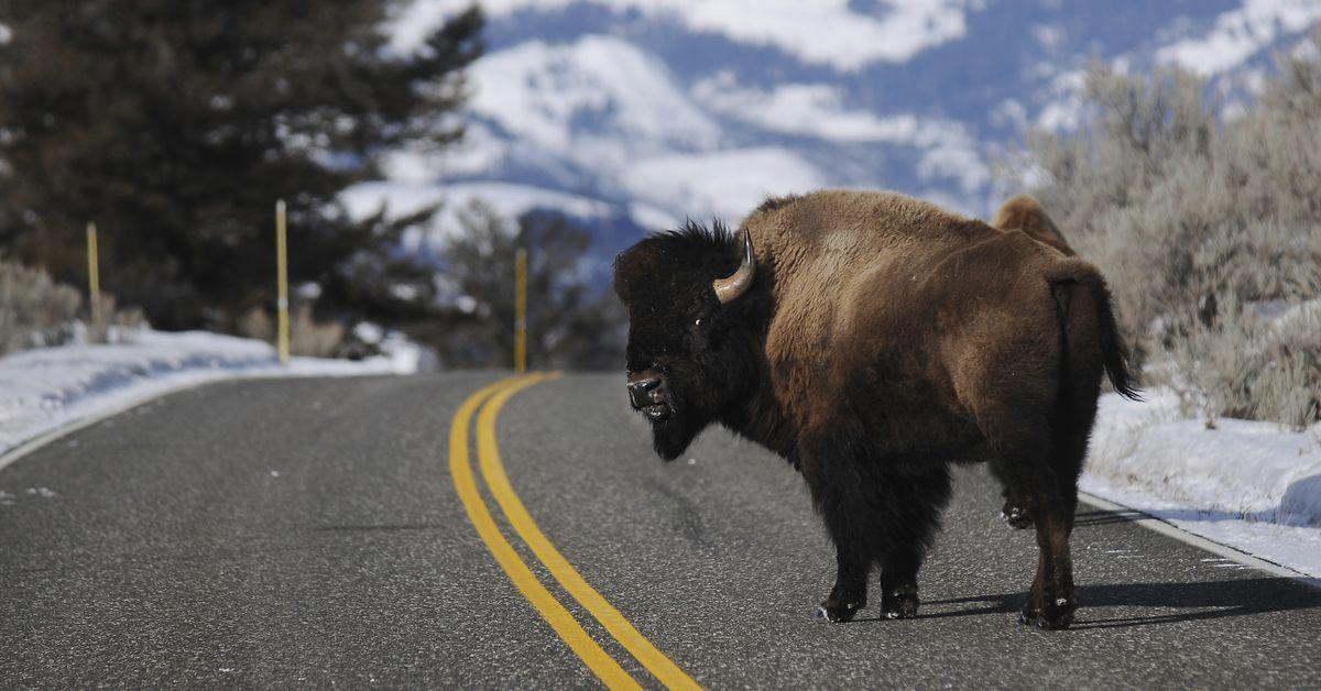 Does wildlife conservation work?  – Vox