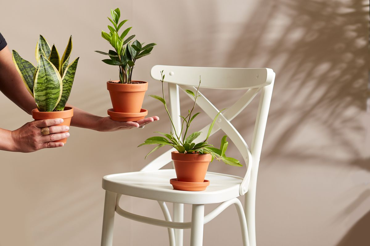 A person holds plants in terracotta pots in each hand, while another one is placed on a white chair.