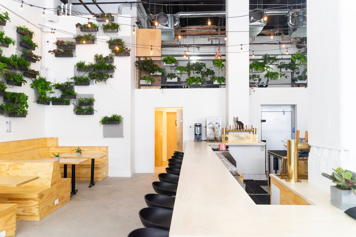 A well-lit taproom with plants hanging on its walls, wooden booth seating, and black bar stools