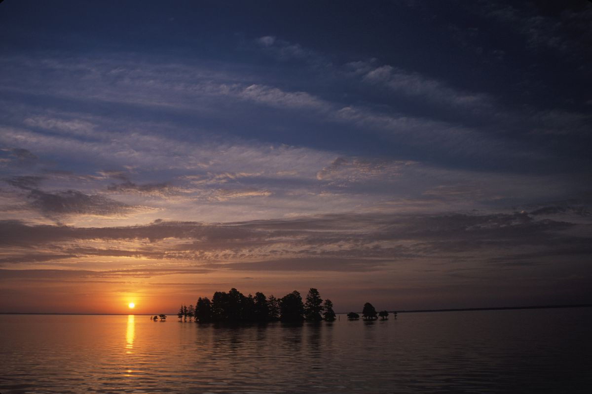 Baldcypress trees at sunrise in North Carolina.