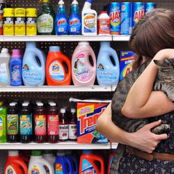 """Not in the Bodega Cats Flickr group, but adorable nonetheless. Via <a href=""""http://www.flickr.com/photos/kate_fink/3991278625/"""">ex animø</a>"""
