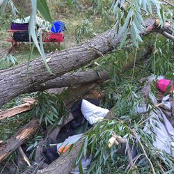 Two boys, ages 7 and 9, were seriously injured when a tree fell on their tent in Provo on Monday, July 11, 2016. Four others escaped without being harmed.