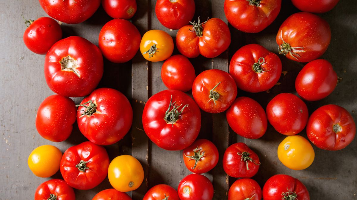 Variety of ripe fresh organic gardening tomatoes different kind and colors with water spot over old grey wooden background.
