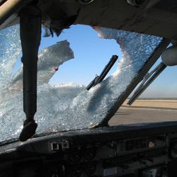This undated handout  photo provided by the city of Show Low, Ariz., shows the windshield of this twin-engine Beechcraft C-99 turboprop was heavily splattered with blood and guts after striking a Western Grebe, a two-foot long water bird, at 11,000 feet over eastern Arizona on Nov. 4, 2009. Most bird strikes don't damage planes or force emergency landings. Ralph Paduano, a United Continental pilot who has flown for 26 years, said he's hit birds both on takeoff and on landing.