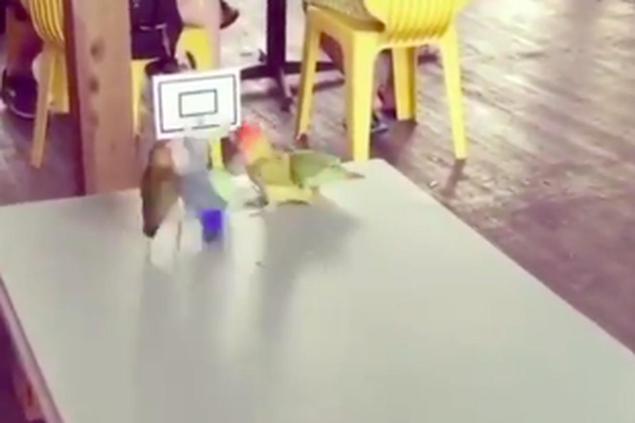 Screen Shot 2020 05 19 at 10.02.56 AM.0 - The best new lockdown sport is bird basketball
