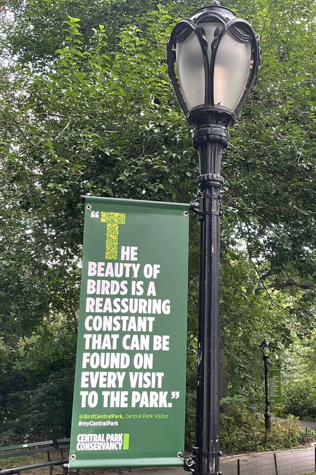 A sign in Central Park extolls  the beauty of birds, Sept. 20, 2021.