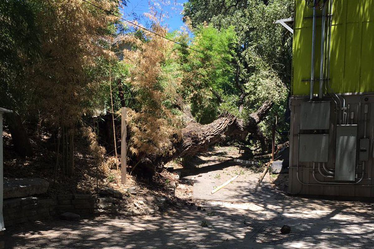 Fallen tree at Winflo Osteria