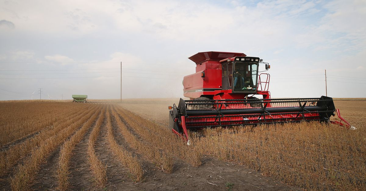 abl farms files bankruptcy