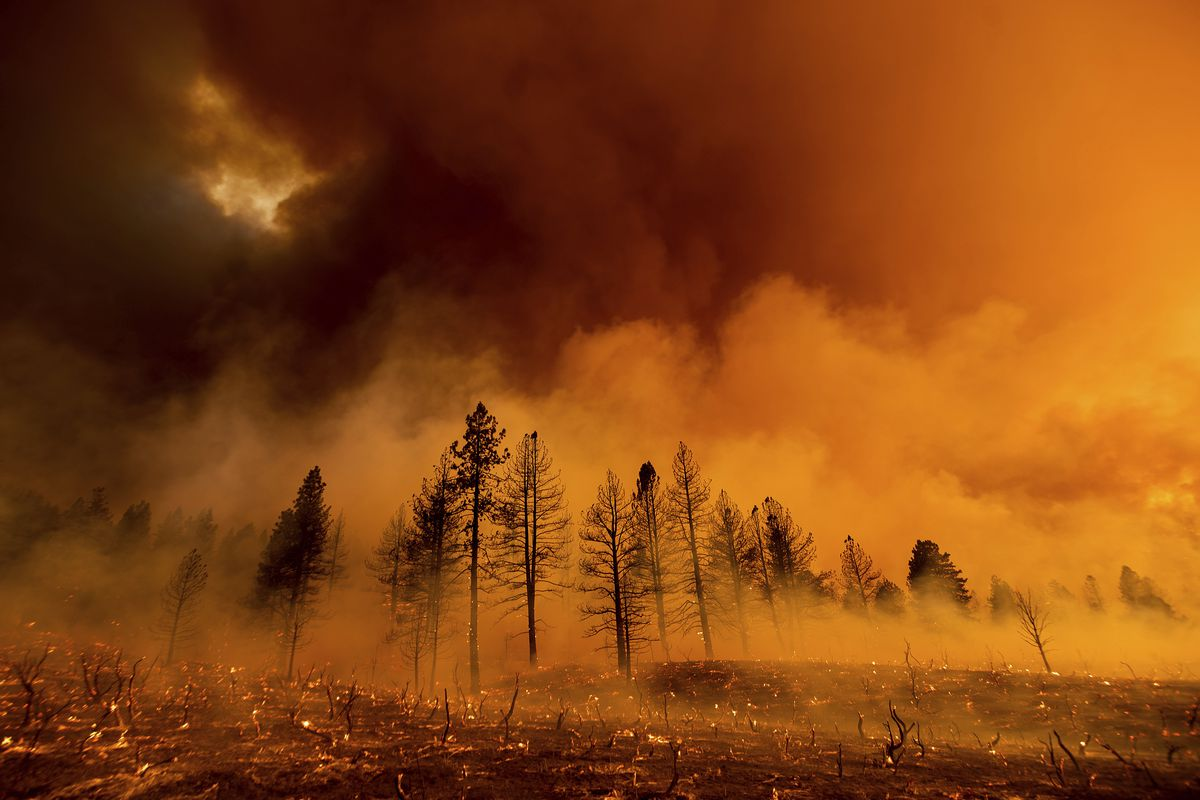 Smoke envelops trees as the Sugar Fire, part of the Beckwourth Complex Fire, burns in Doyle, California. The Beckwourth Complex Fire has burned roughly 55,100 acre, the largest in California this year.
